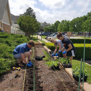 students for sustainability plant a garden outside of TU's on campus apartments