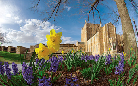 The University of Tulsa campus in spring
